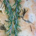 Focaccia & Rosemary are going steady!